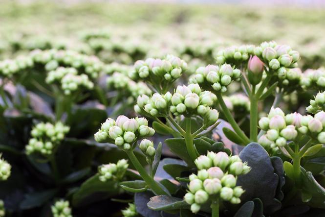 Totaal regionaal - Köstliches und Florales aus Holland